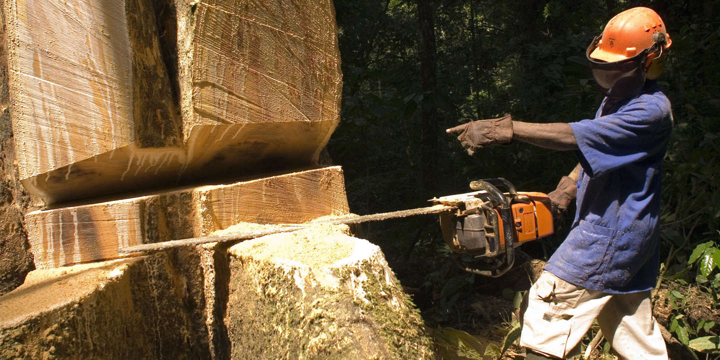 As Oil Fades, Gabon Bets on Its Forests
